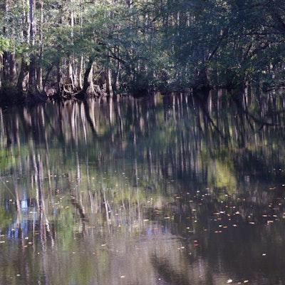 Edisto River running along western boundary of one property.