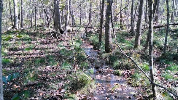 Forestedwetlands