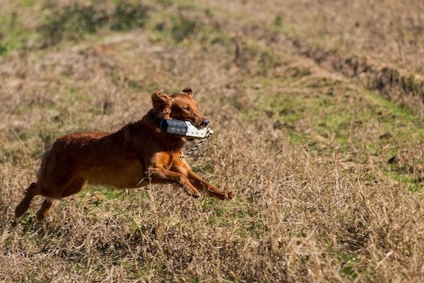 2019 Fall Celebration Congaree Land Trust 8755