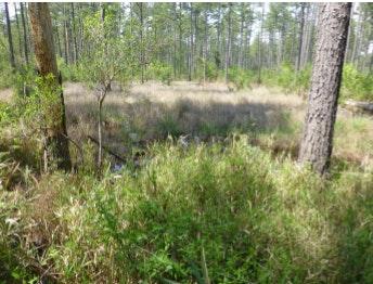 Wildlifehabitat Grassland Bishopville