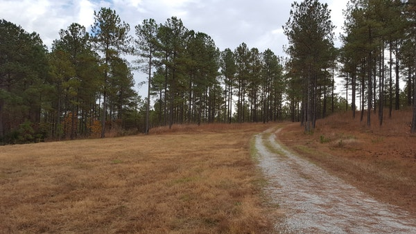Dirt Road on the Property