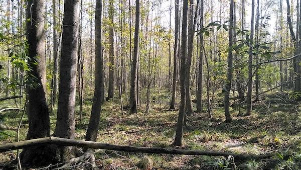 Hardwoodforest